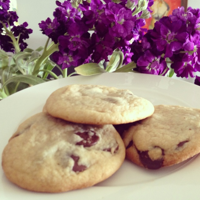 Chocolate Chip Cookies from Dogs Dishes and Decor